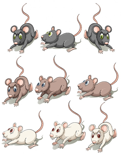 A group of mice Free Vector