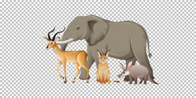 투명 한 배경에 아프리카 야생 동물의 그룹 무료 벡터