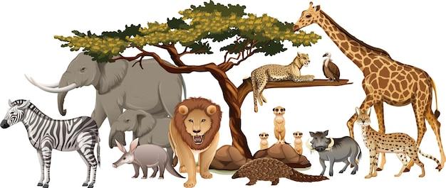 白い背景の上の野生のアフリカの動物のグループ 無料ベクター