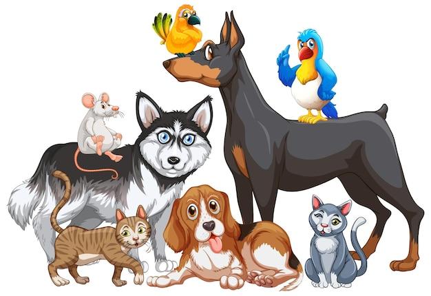 Gruppo di animali domestici su sfondo bianco Vettore gratuito