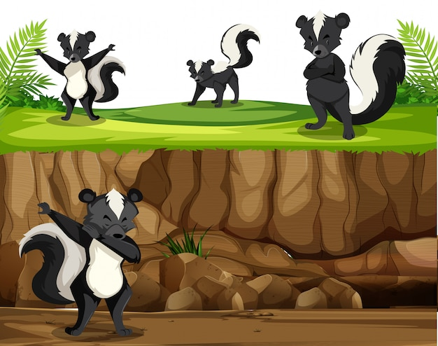 Group of skunk in nature Free Vector