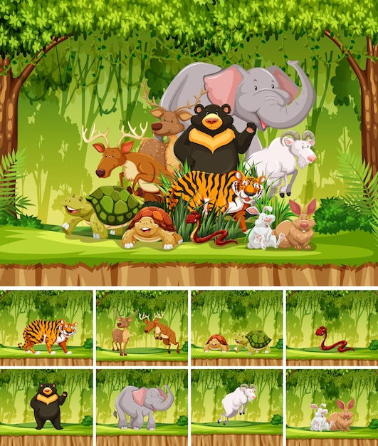 Group of wild animal in jungle Premium Vector