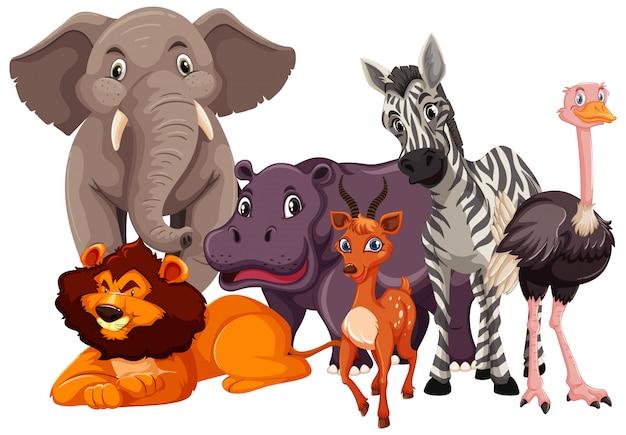 Gruppo di animali selvatici Vettore gratuito