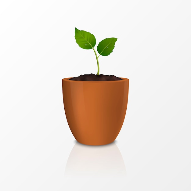 Premium Vector Growth Concept Template Of Realistic Icon Of The Sprout In A Brown Flower Pot Isolated On White Background