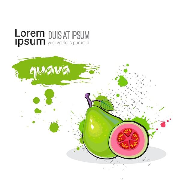 Guava hand drawn watercolor fruit Premium Vector
