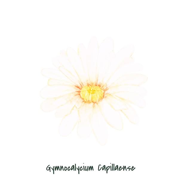 手描きのgymnocalycium capillense cactus 無料ベクター