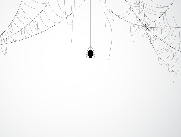 Halloween background design with black spider and torn web Premium Vector