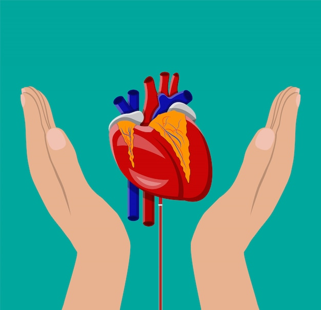 Hand of donor with heart Premium Vector