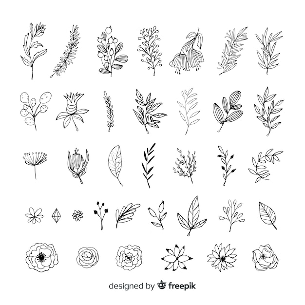 Free Vector Hand Draw Floral Decoration Elements