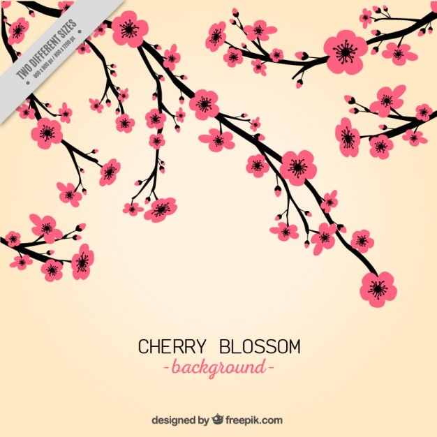 hand draw pink cherry blossom background vector premium download