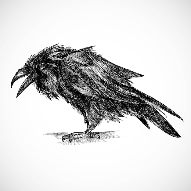 Hand draw raven sketch design Free Vector