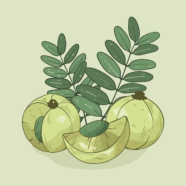 Hand drawn amla fruit illustrated Free Vector