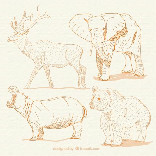 Hand drawn animals Free Vector