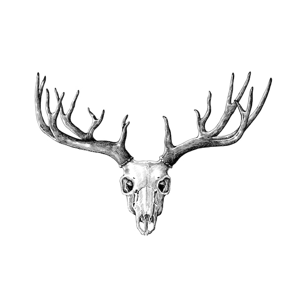Hand drawn antlers isolated on white background Premium Vector
