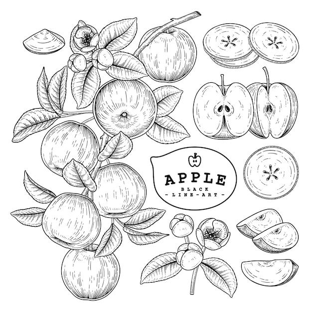 手描きのアップルフルーツ要素セット Premiumベクター