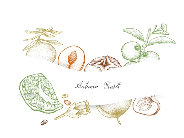 Hand drawn autumn fruits of pomegranat, persimmons and plums Premium Vector