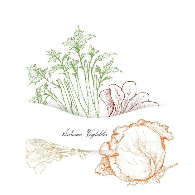 Hand drawn of autumn vegetables, celery and cabbages Premium Vector