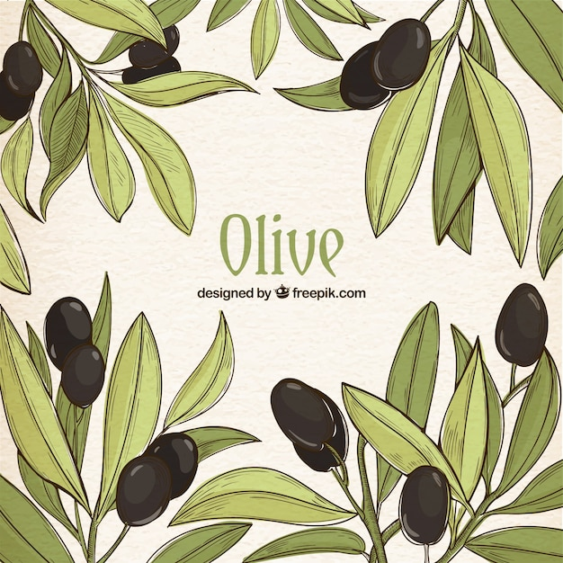 Hand-drawn background of green leaves and black olives Free Vector