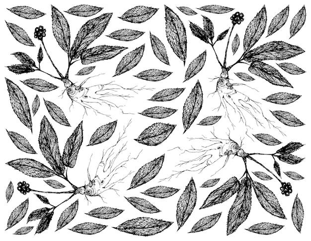 利点の根を持つ高麗人参植物の手描きの背景 Premiumベクター