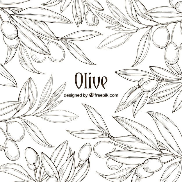 Hand-drawn background of olive branches Free Vector