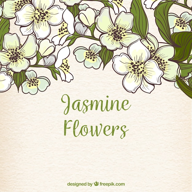 Hand Drawn Background With Jasmine Flowers Vector Free Download