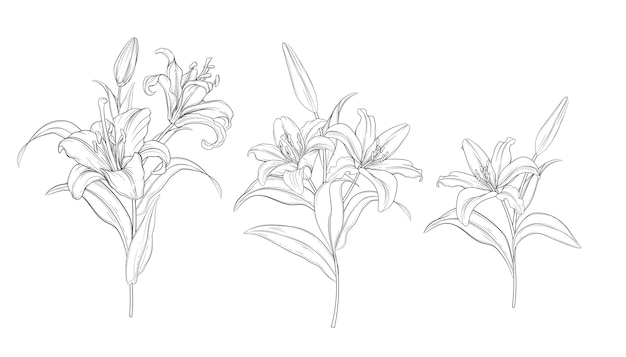 Hand drawn beautiful  lily bouquets Free Vector