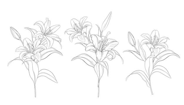 手描きの美しいユリの花束 無料ベクター