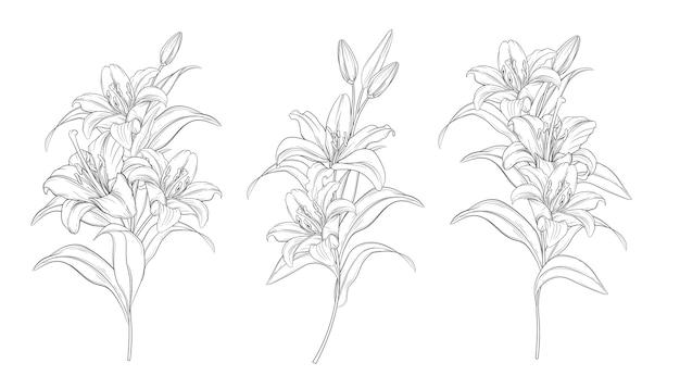 손으로 그린 아름 다운 백합 꽃다발 무료 벡터