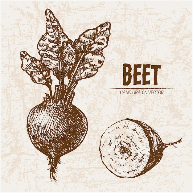 Hand drawn beet collection Free Vector