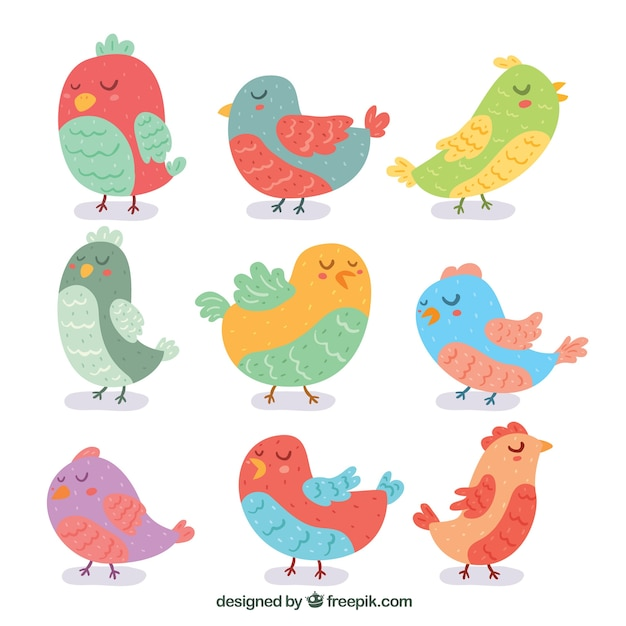 Hand drawn bird collection Free Vector