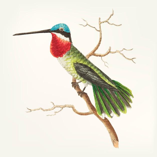 Hand drawn of bird Free Vector