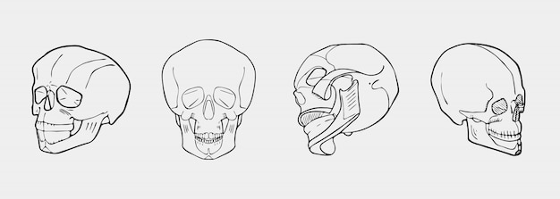 Hand drawn black and white skulls set Premium Vector
