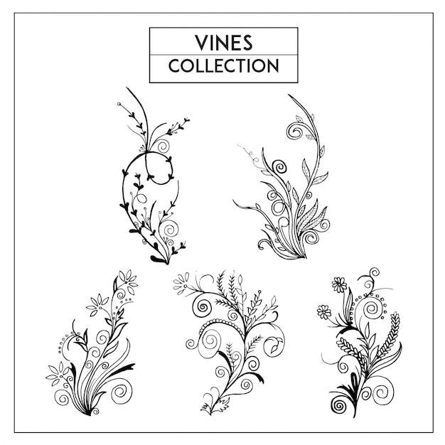 free vector | hand drawn black and white vines collection  freepik
