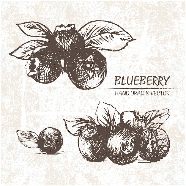 Hand drawn blueberries design Free Vector