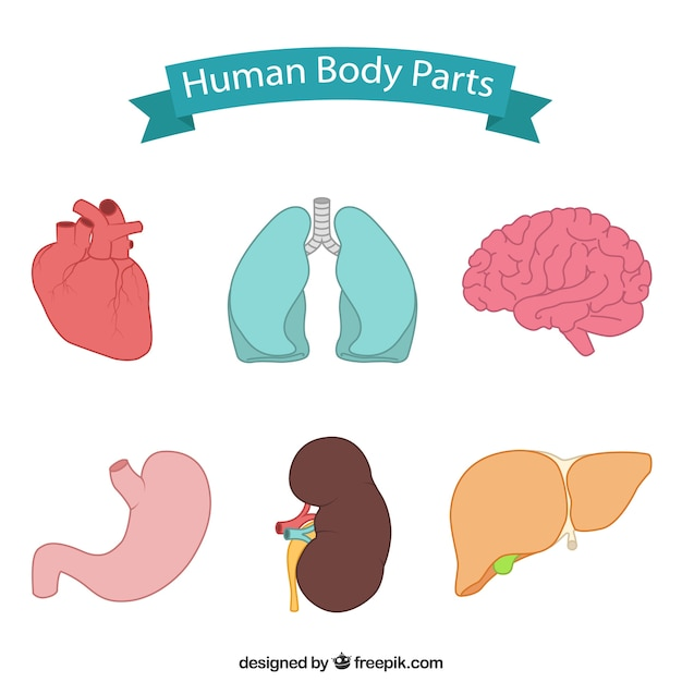 Hand drawn body parts Free Vector