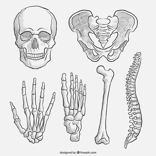Hand drawn body parts Vector | Premium Download