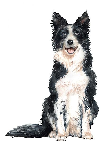 Hand drawn border collie watercolor dog. Premium Vector