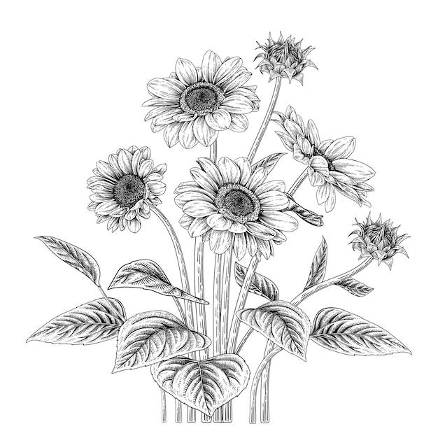 Рисованной ботанические иллюстрации Premium векторы