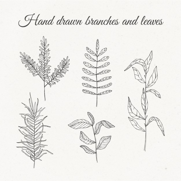 hand drawn branches and leaves vector