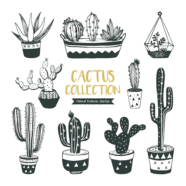 Hand drawn cacti and succulents collection Premium Vector