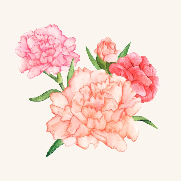 Hand drawn carnation flower isolated Free Vector