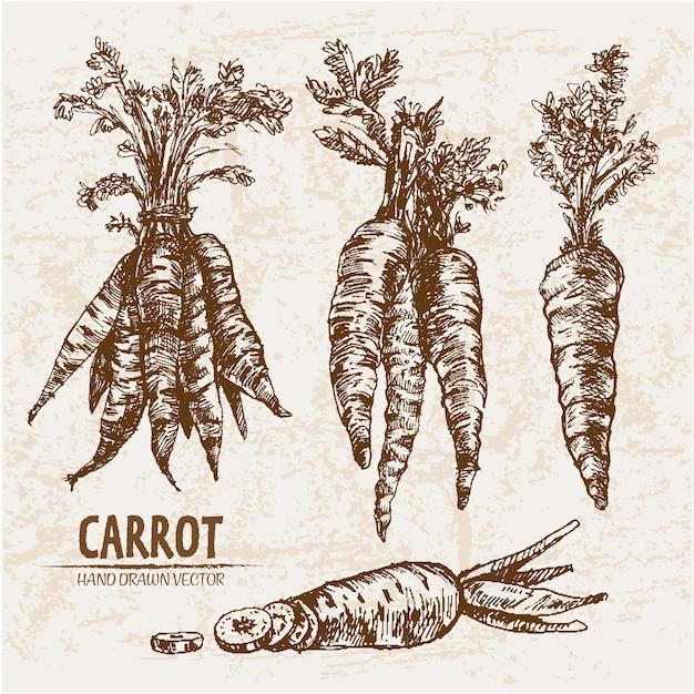 Коллекция рисованной моркови Бесплатные векторы