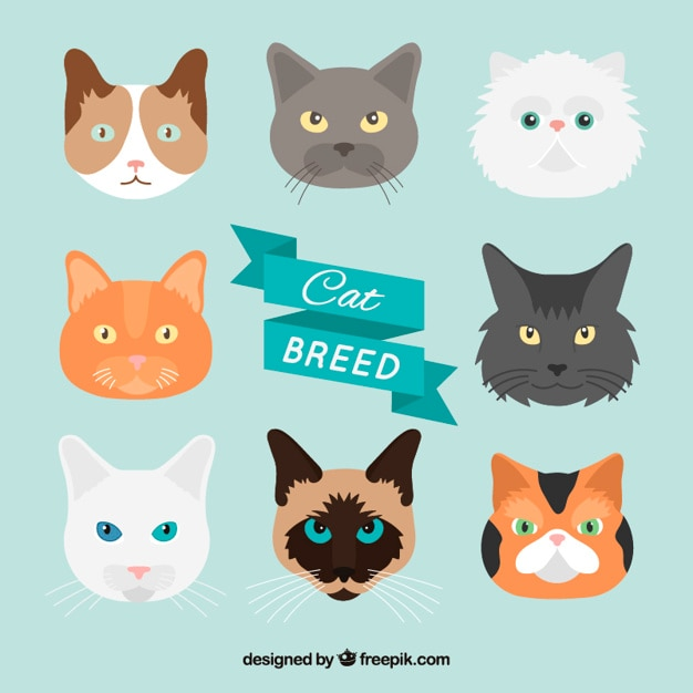 Hand drawn cat breed pack