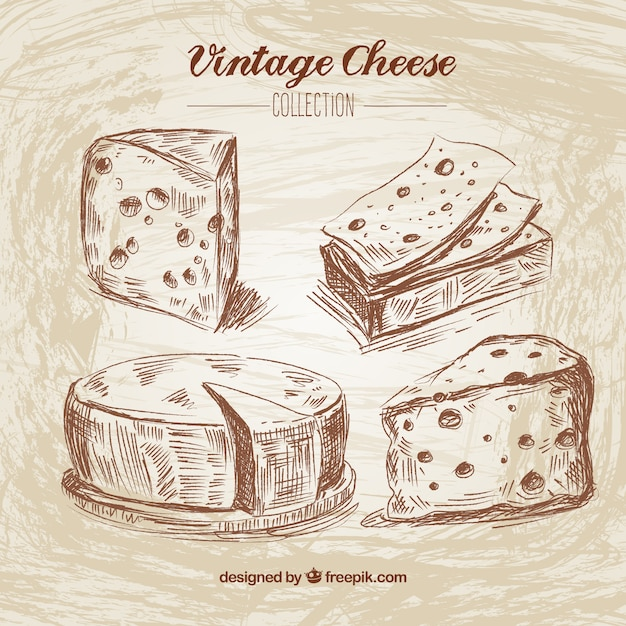 Hand Drawn Cheese In Vintage Style Vector