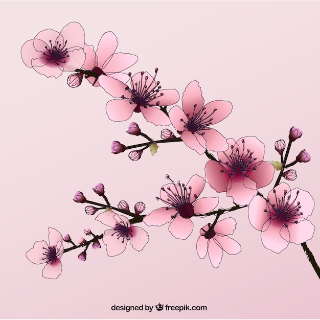 how to draw cherry blossoms in illustrator