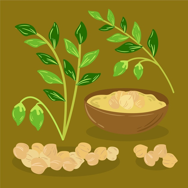 Hand drawn chickpea beans and plant illustration Premium Vector