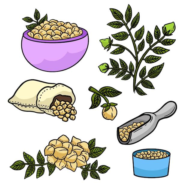 Fagioli di ceci disegnati a mano e illustrazione della pianta Vettore gratuito