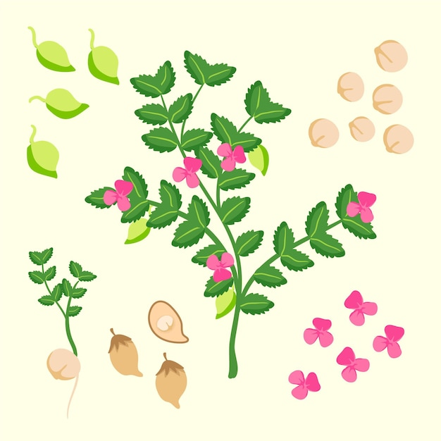 Hand-drawn chickpea beans and plant illustration Free Vector