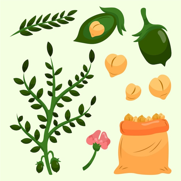 Fagioli e pianta di ceci disegnati a mano Vettore gratuito