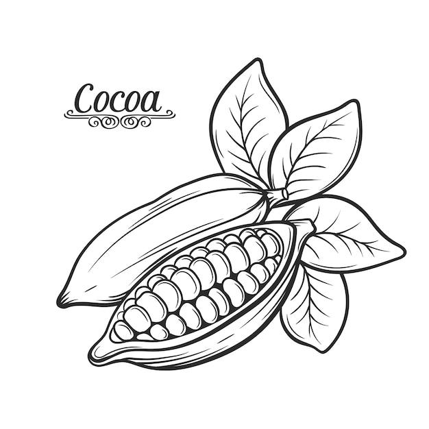 Ручной обращается какао-бобов. Premium векторы